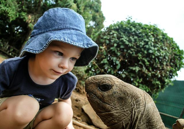kluk u želvy